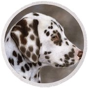 Dalmatian Puppy Painting Round Beach Towel
