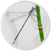 Damselfly On Horsetail Round Beach Towel