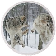 Round Beach Towel featuring the photograph Dances With Wolves by Wolves Only