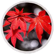 Round Beach Towel featuring the photograph Dancing Japanese Maple by Rona Black