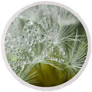 Dandelion Dew Round Beach Towel by Amy Porter