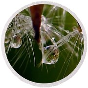 Dandelion Droplets Round Beach Towel by Suzanne Stout