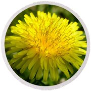 Dandelion Round Beach Towel by Ron Harpham