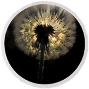 Dandelion Sunrise - 1 Round Beach Towel by Kenny Glotfelty