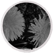 Round Beach Towel featuring the photograph Dandelion Weeds? B/w by Martin Howard