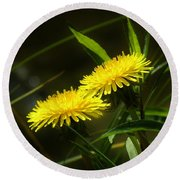 Round Beach Towel featuring the photograph Dandelions by Sherman Perry
