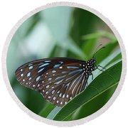 Dark Blue Tiger Butterfly #2 Round Beach Towel by Judy Whitton