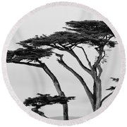 Dark Cypress Round Beach Towel by Melinda Ledsome