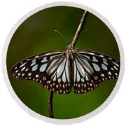 Dark Glassy Tiger Butterfly On Branch Round Beach Towel