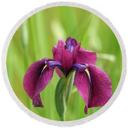 Dark Magenta Iris Round Beach Towel by E Faithe Lester