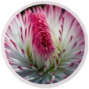 Dark Pink And White Spiky Petals Round Beach Towel