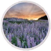 Dawn Of Lupine Round Beach Towel