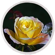 Round Beach Towel featuring the photograph Day Breaker Rose by Kate Brown