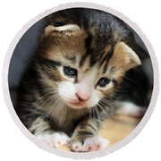 Round Beach Towel featuring the photograph Daydreamer Kitten by Terri Waters