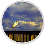Daytona Beach Fl Bird Sun Glow Pier  Round Beach Towel