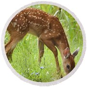 Round Beach Towel featuring the photograph Little Fawn Blue Wildflowers by Nava Thompson