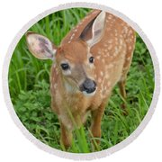 Deer 42 Round Beach Towel