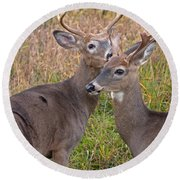 Deer 48 Round Beach Towel