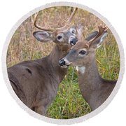 Deer 49 Round Beach Towel