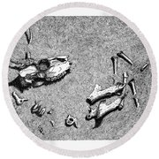 Deer Bones Round Beach Towel by Daniel Reed