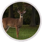 Round Beach Towel featuring the photograph Deer In Headlight Look by Tammy Espino