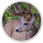 Round Beach Towel featuring the photograph Buck In The Woods by Athena Mckinzie