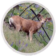 Round Beach Towel featuring the photograph Deer In Wildflowers by Athena Mckinzie