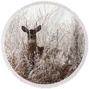Deer In Winter Round Beach Towel