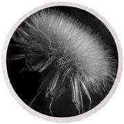 Round Beach Towel featuring the photograph Delicate by Edgar Laureano