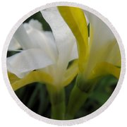 Delicate Iris Round Beach Towel by Cheryl Hoyle