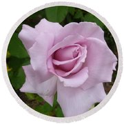 Round Beach Towel featuring the photograph Delicate Purple Rose by Lingfai Leung