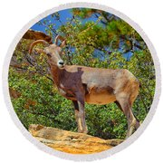 Desert Bighorn Sheep Round Beach Towel by Greg Norrell