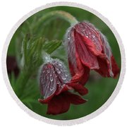 Dew Covered Pasque Flower Round Beach Towel