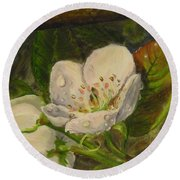 Dew Of Pear's Blooms Round Beach Towel