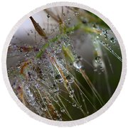 Round Beach Towel featuring the photograph Dew On Fountain Grass by Joe Schofield