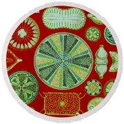 Diatoms-ernst Haeckel Round Beach Towel
