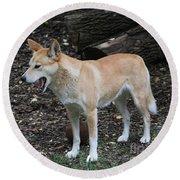Dingo #2 Round Beach Towel
