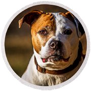 Round Beach Towel featuring the photograph Dixie Doodle The Pit Bull by Eleanor Abramson