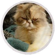 Round Beach Towel featuring the photograph Do I Look Amused? by Vicki Spindler