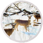 Does In The Snow Round Beach Towel