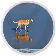 Dog On Water Mirror Round Beach Towel by Susan Wiedmann