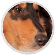 Round Beach Towel featuring the photograph Dog Portrait by Randi Grace Nilsberg