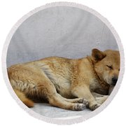 Dog Sleeping Round Beach Towel
