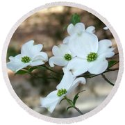 Round Beach Towel featuring the photograph Dogwood 2 by Andrea Anderegg