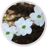 Round Beach Towel featuring the photograph Dogwood by Andrea Anderegg