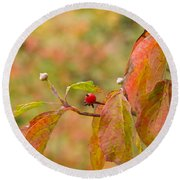 Round Beach Towel featuring the photograph Dogwood Berrie by Nick Kirby