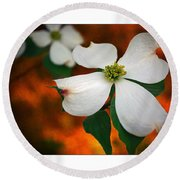 Dogwood Blossom Round Beach Towel by Brian Wallace