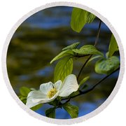 Dogwood On The Merced Round Beach Towel