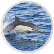 Dolphin At Play Round Beach Towel by Shoal Hollingsworth
