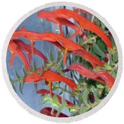 Round Beach Towel featuring the photograph Dolphin Plant by Brenda Brown